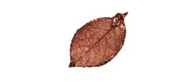 Blattrausch-Herstellungsprozess-Schirtt3-Lackierung-Leitfaehigkeit