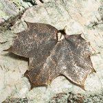 Kategorie - Blätter in Antik